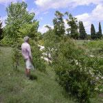 Open landschap in Griekenland met Ceriana, Criorhina etc