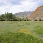 rivierbos met bloemrijke weides