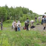 sphagnum veen nabij Komsomolsk na Amur