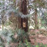 De kast in een nieuwe boom en het water aangevuld