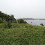 eilandje met diverse aalscholvers, zeekoeten, meeuwen, harlekijn eend en duikers