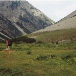 Alpine weide bij Hahntennjoch