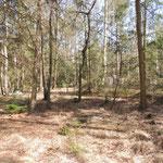 Habitat vochtig bos Pijnenburg