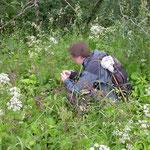 Tammisto arboretum met veel Cheilosia larven in de distels en nagelkruid