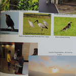 Mingshi and Yangmingshan and Taipei with Crested Myna, Sacred Ibis, Black-collared starlin