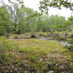 Caltha moeras nabij Komsomolsk na Amur