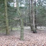 Het bos bij de Soester duinen