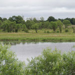 moeras bossen bij Khor rivier