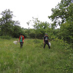 Psarus habitat