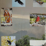 overview with Kertesziomyia violascens and Crested serpent eagle