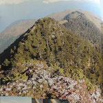 Mt Hehuan White-wiskered laughingthrush en Grey-headed Bulfinch