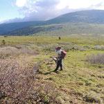 vochtige alpine weide richting Sarlyk mountain