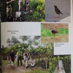 Fuyuan and Matai'an wetlands, Javan Myna and White breasted waterhen