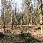Habitat Eiken-dennen moeras