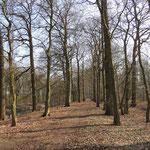 De bomenlaan waar de nestkasten komen te hangen