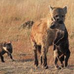 THEYS Christian. Bébés hyènes