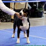 Russia - 2010 Best puppy in breed!
