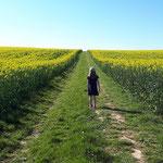 balade autour du champs de colza au pied de la propriété - avril 2020