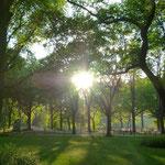 Kurz vorm Sonnenuntergang im Central Park