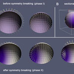 Simulating symmetry breaking in the Hydra polyp