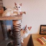 Cosima und Coco