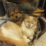 Vicaro & Tobi