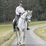 Schulterherein auf dem Feldweg, Foto: Lisa Rädlein www.cavallo.de