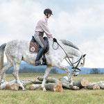 Schön zu sehen, wie das Pferd über den Bäumen die Oberlinie dehnt. Foto: www.cavallo.de