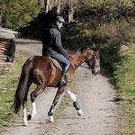 Zickzackreiten auf dem Waldweg, Foto: Lisa Rädlein www.cavallo.de