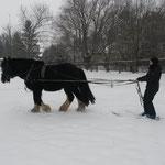 Zorro beim Skijöring