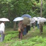 気づきの日・雨の日の歩く瞑想