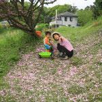 八重桜の道・ゆとり家から畑に行く道