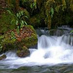 La fameuse Gourgue d'Asque, aussi connue comme la petite Amazonie des Pyrénées
