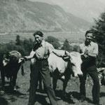 Landwirtschaft Rietz um 1935