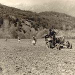 Kartoffelanbau 1965