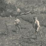 Schöffthaler Otto und Haas Heinz 1940
