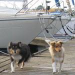 Stegpatrouille - Sally und Baxter