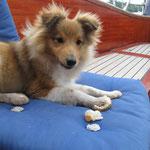 Baxter ißt alles (5 Monate)