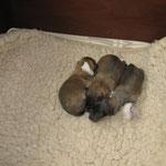 1. Woche - Noch schlafen sie viel