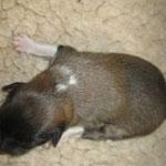 Baxter, kurz nach der Geburt