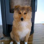 Butch heißt jetzt Rocky und ist hier 4 Monate alt