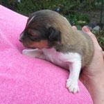 Berry, 1 Woche alt