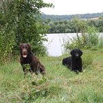 Vasco et son copain Diego (curly coated retriever)