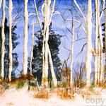 Winter im Birkenwald