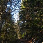 Première partie de la balade : montée dans les bois de Verreu au-dessus de la fruitière