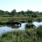"""Nature reserve """"Petite Camargue"""" near St. Louis"""