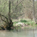 https://www.naturzentrum-rheinauen.eu/de-de/schutzgebiete/das-taubergiessen