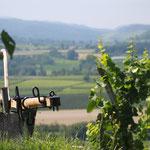 Une jolie vue aux alentours du Breisgau- La Foret Noire