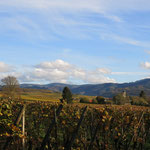 Nice view to the Black Forest in autumn. The Photo has been shot from Bad Krozingen.