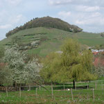 https://www.outdooractive.com/de/wanderung/schwarzwald/historischer-castellberg/17481042/